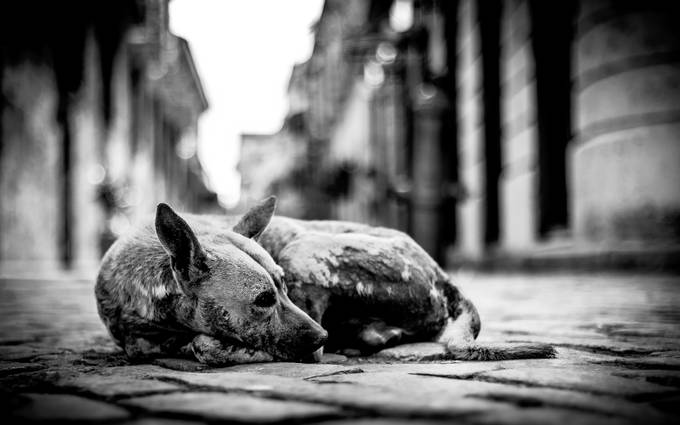 The True of Habana by borodatyj - Subjects On The Ground Photo Contest