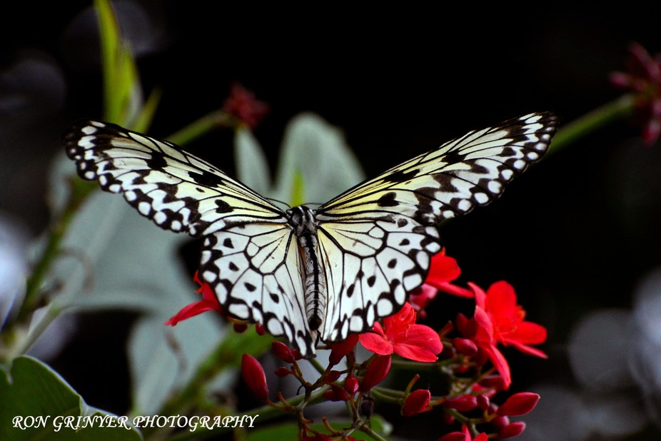 Shot at The Butterfly Conservatory Niagara Falls. Canada with my Nikon D5200 and a 70-300mm lens