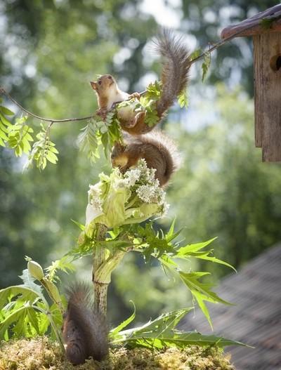 squirrel playground