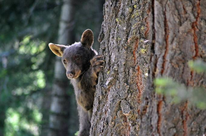 Can I Come Down Now? by texaaronpueschel - Celebrating Nature Photo Contest Vol 5
