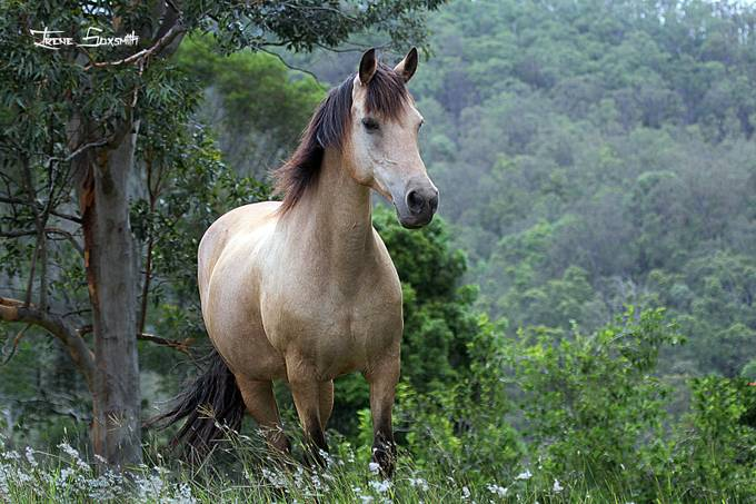 Horse by irenejoysoxsmith - The Nature Lover Photo Contest