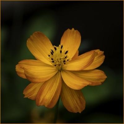orange & yellow blossom