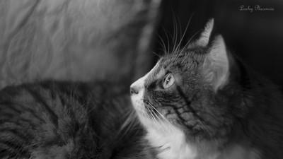 Gaia Bollito, my cat