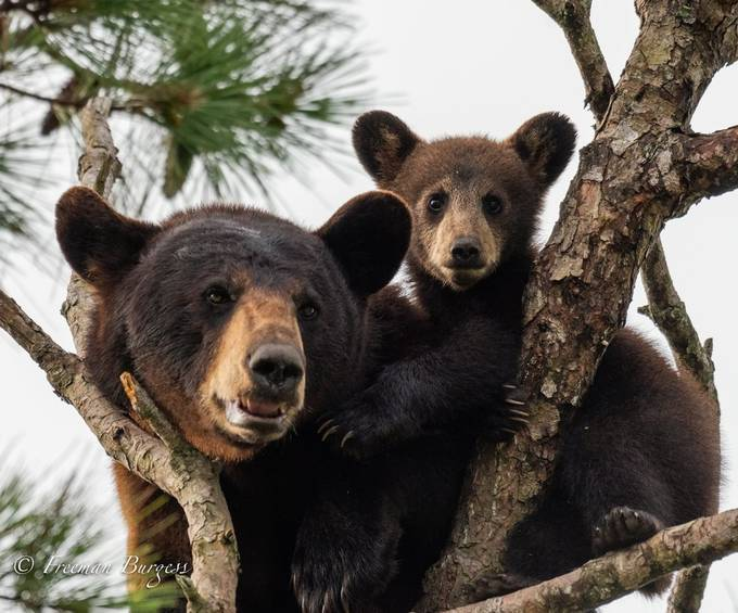 Mother and Cub by FreeShooter - Bears Photo Contest