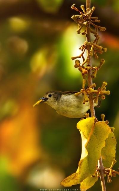 Bird-with-Food