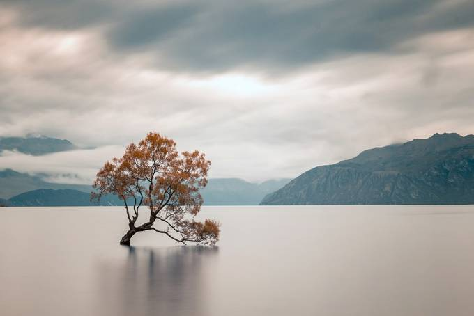 That Wanaka tree by IamAleks - Rule Of Thirds Photo Contest v4