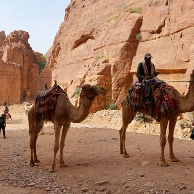 Transportation vehicles for meandering around the stunning lost and ancient city of Petra, Jordan!