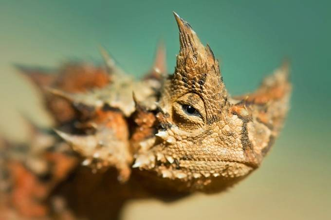 Lizard by TK00uheed - Reptiles Photo Contest
