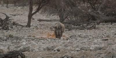Lonely Rhino