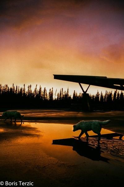 Sunset Dogs