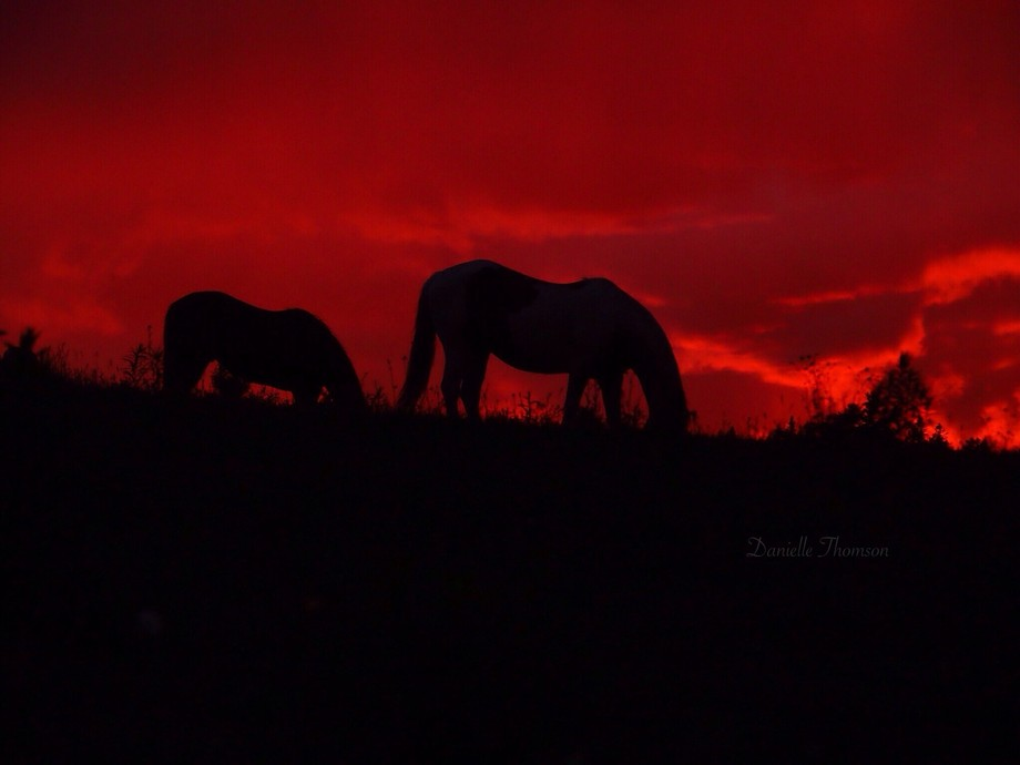 While driving home I could see the sunset was all red. I raced up the hill to where our horses we...