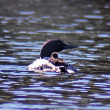Took this photo while fishing on Rainy Lake. Northern Minnesota, Northwestern Ontario, Canada Nikon D3400 Lightdow 420-800 lens