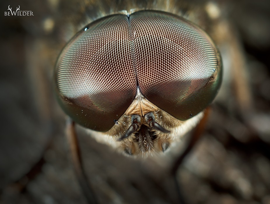 I just love insects! The compound eyes on this chap are amazing!  Shot with my awesome Olympus om...