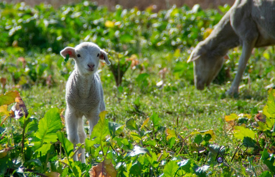 Went to visit some friends on a nearby farm and took the opportunity to photographs some of the l...