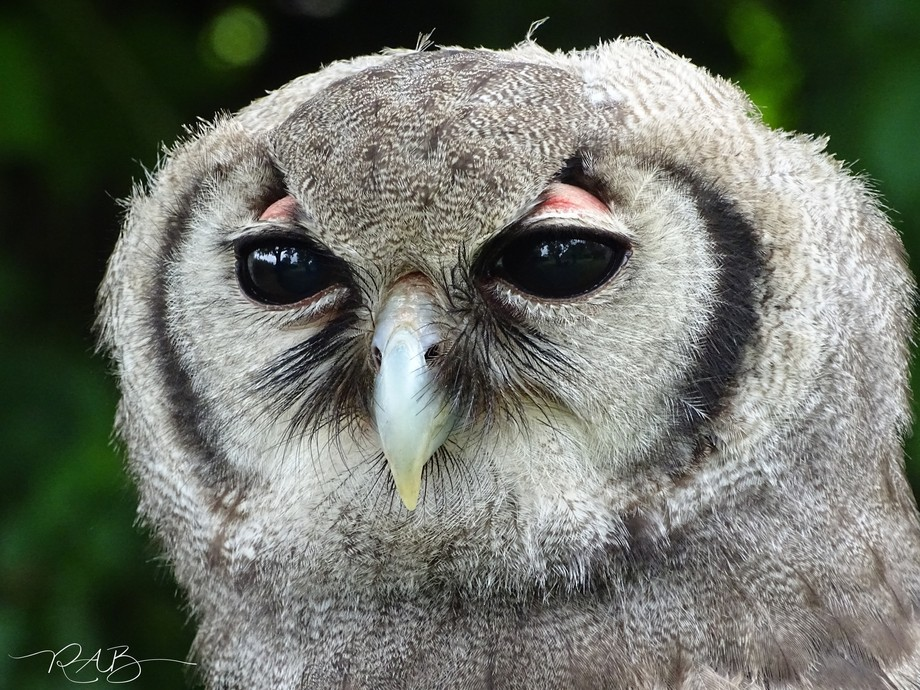 Taken during a bird of prey photography workshop.