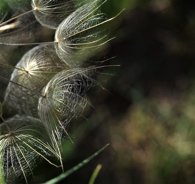 Blowing in the Wind (1)