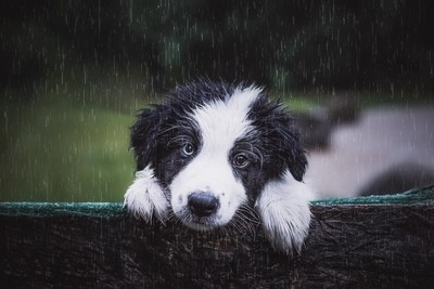 My first rainy day