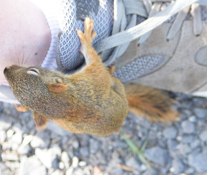 Went out to see what was by the shed in the yard when this baby squirrel and its siblings tried to climb up my legs!