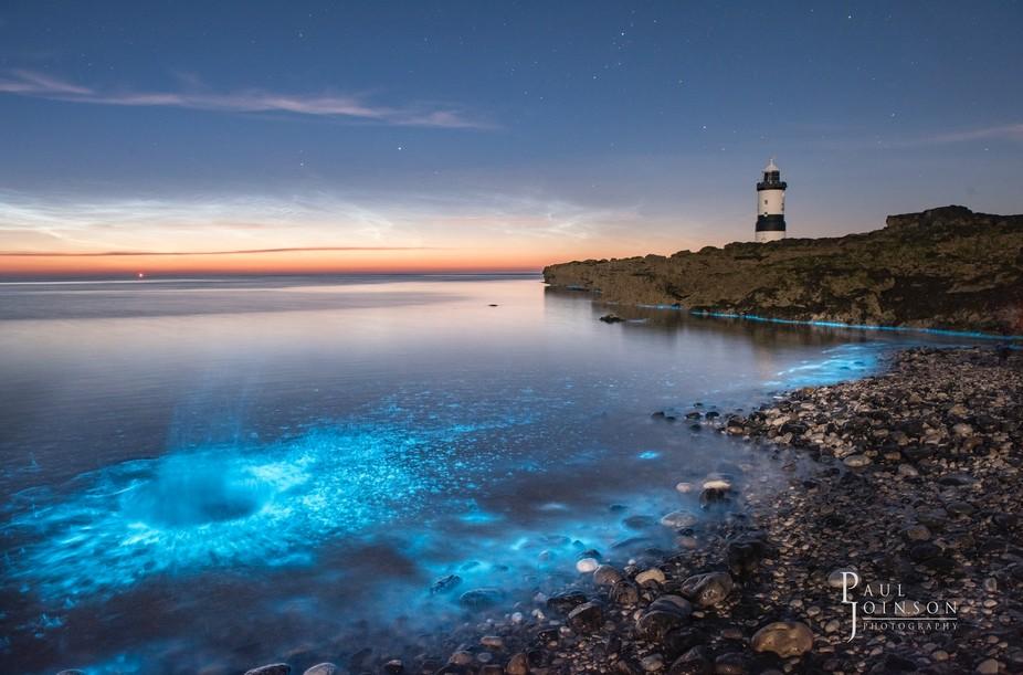 bioluminescence plankton