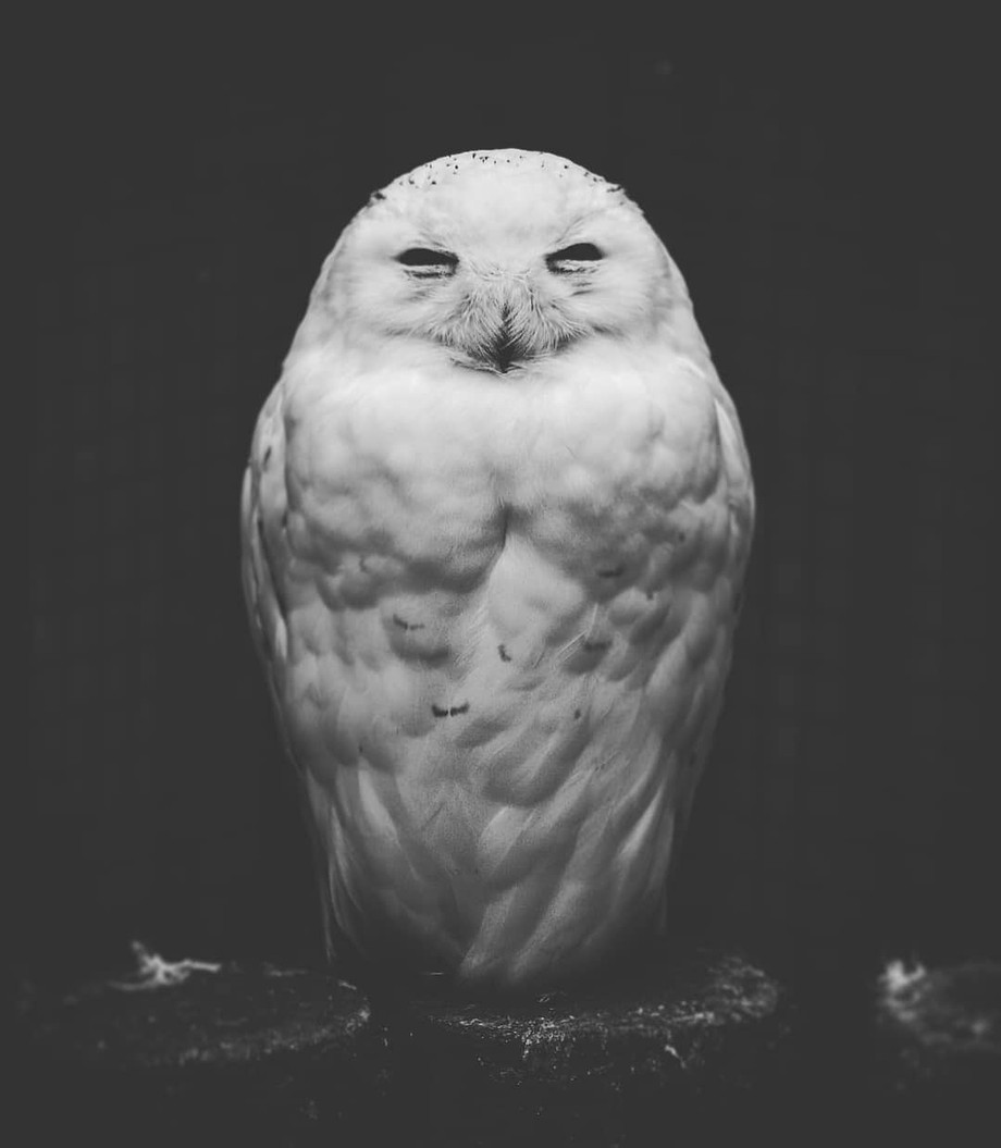 Love Owl by LucaG79 - Celebrating Earth Day Photo Contest 2019