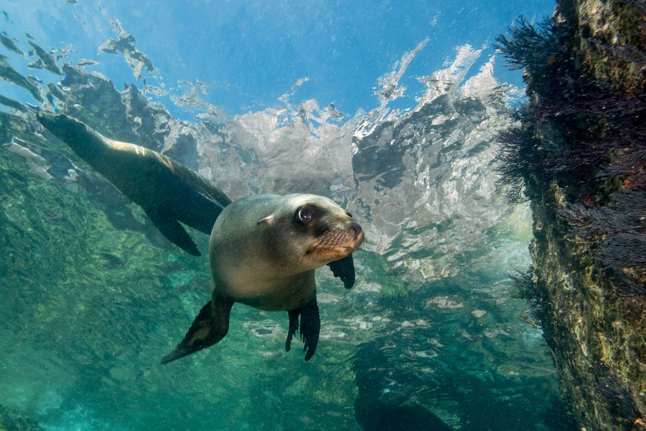A sea lion colony at the southern part of sea of cortez. The sea lion puppys are worth a visit.