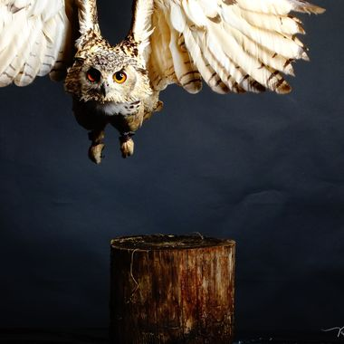 Epic Fail of me not moving along with the owl whilst flying towards its handler. Shame it is a nice pic, could've been a great pic, and again, could've, would've, should've don't do anything when taking pictures......