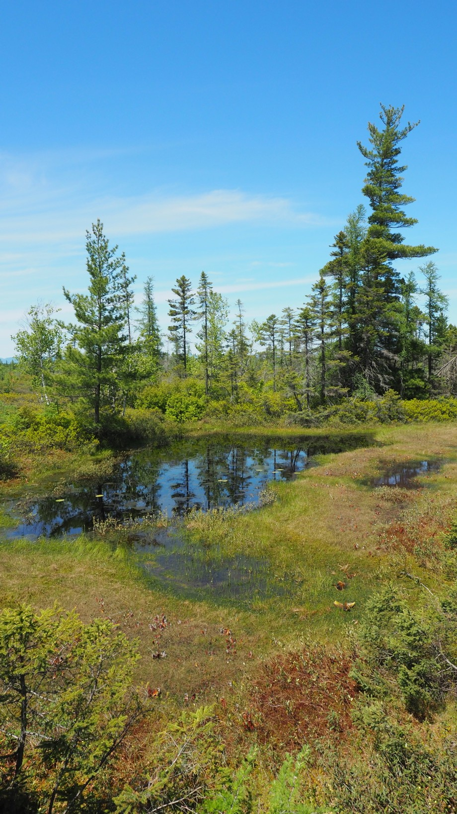 La Grande Plée bleue 1 (Lévis, Qc). Une tourbière naturelle protégée et unique d'un...