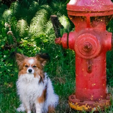 Dogs and fire-hydrants are normally close friends.