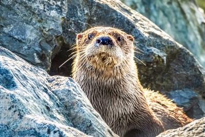 An Otter Day