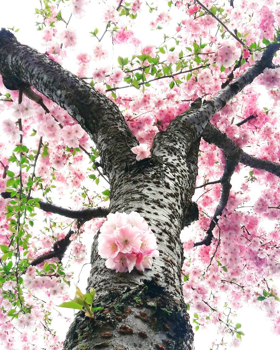 IMG_20180410_144000_582 by Sarahko88 - Pink Photo Contest
