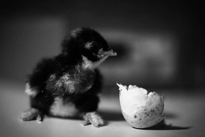 by giadarandaccioskourassweeny - Small Wildlife Photo Contest