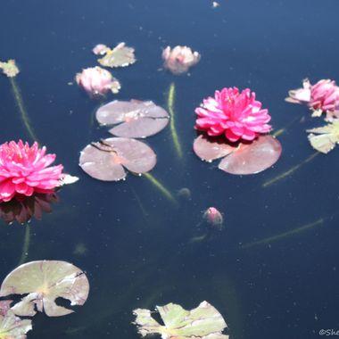 Summer at Denver Botanical Gardens