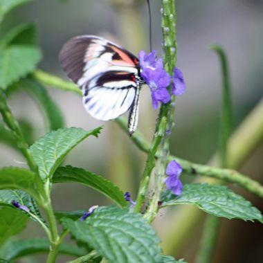 Butterfly Gardens Ft. Lauderdale, FL