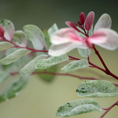 Botanical Gardens, Ft. Lauderdale, FL