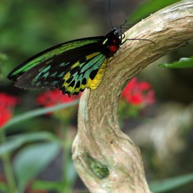 Butterfly Gardens, Ft. Lauderdale, FL
