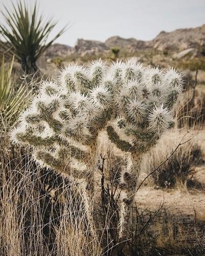 Lookin' like the perfect bouquet ????????.#beautiful #silence #desert #q