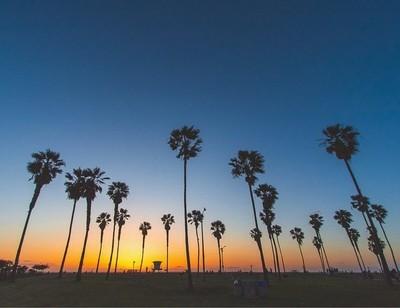 Palm tree skyline at misson beach california