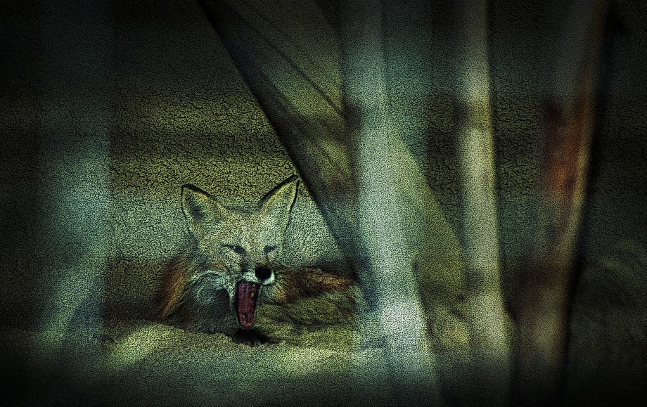 Fox Cry_Poster