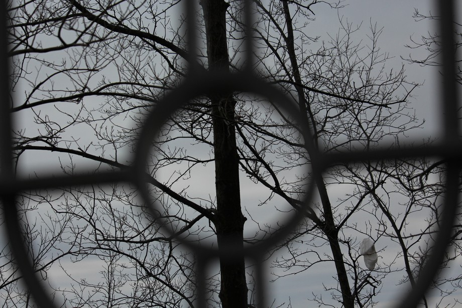 Taken in Niagra Falls, Ontario Canada. A cool rainy day in February of 2018. This image was taken through the decoration in the fence, creating a different view. Not sure what is hanging in the tree!! LOL