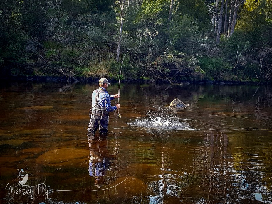 Some of the Tasmanian rivers feature quite dark tannin stained water.  The all feature trout, the...