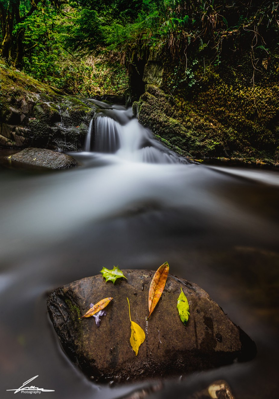 Killarney national park  by Goran_Loncar - The Natural Planet Photo Contest