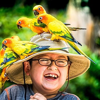 Parakeet Party