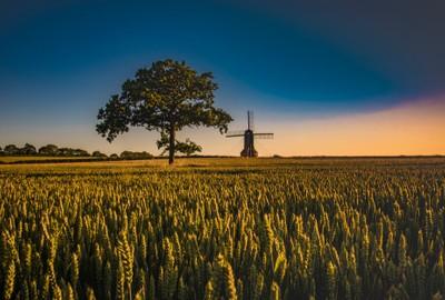 Golden hour @ Stevington Mill