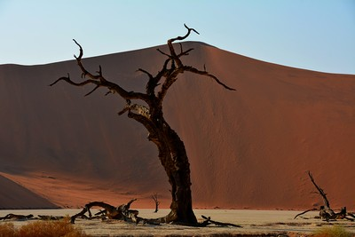 DSC_4423 Sand Dunes 20 Namibia 2016.
