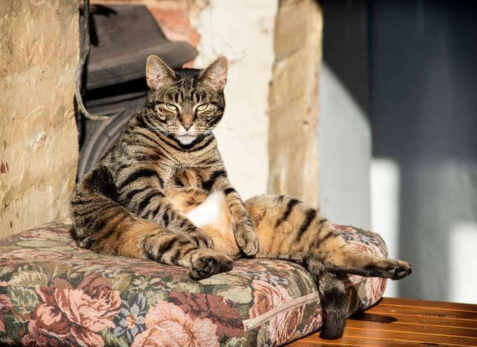 Catching a few winter rays, Tiger sits like that when she is chilling watching the world go bye.
