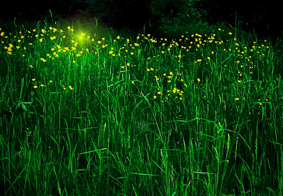 Buttercup magic!