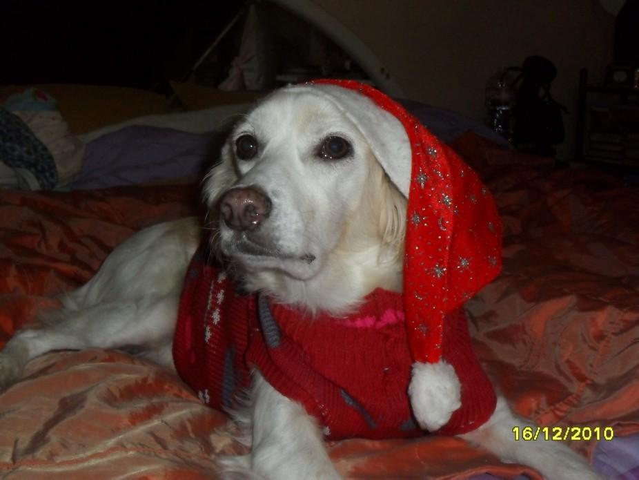 Doggie Santa