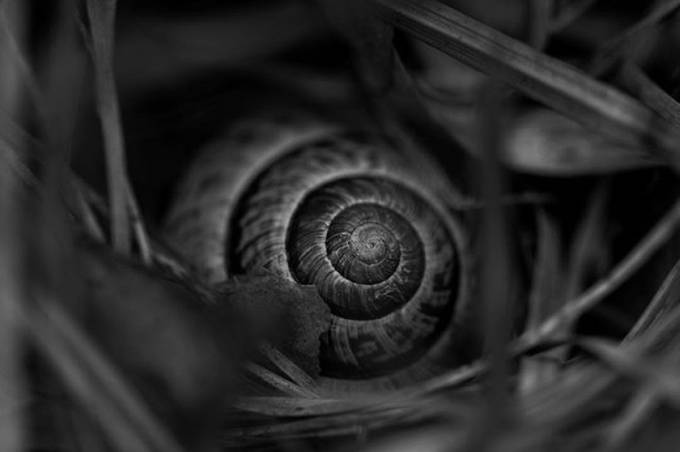 snail.  by nootography - Spirals And Composition Photo Contest