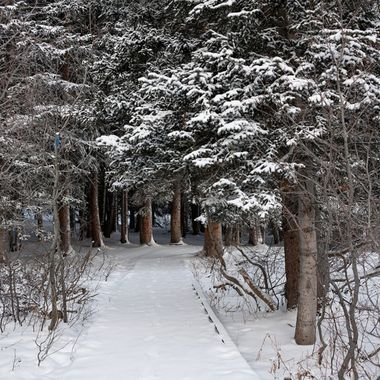 "This path goes around Silver Lake at Brighton, Utah.  There is peace in the forest.  In Japan, you can get a prescription for ""forest therapy."""