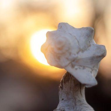Shell in the Sun